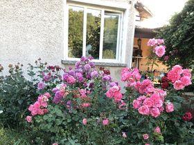 Вила под наем Розова градина